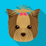 Muzzle of a pet, a hairdress dog with a bow. Pet ,dog care single icon in flat style vector symbol stock illustration Stock Photos