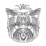 Muzzle of a pet, a hairdress dog with a bow. Pet ,dog care single icon in outline style vector symbol stock illustration Royalty Free Stock Photography