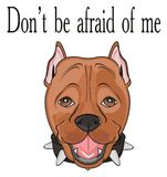 Snout of staff with many words. Muzzle of pitbull with inscription don`t be afraid of me Royalty Free Stock Images