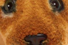 Muzzle plush leopard closeup. Eyes and nose plush leopard closeup stock image