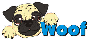 Muzzle of pug with word woof Royalty Free Stock Photo
