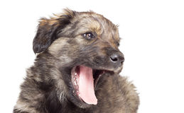 Muzzle puppy Stock Photo
