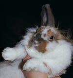 Muzzle rabbit Royalty Free Stock Photos