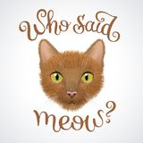 Muzzle of red cat with question: Who said meow?. Character and lettering illustration Royalty Free Stock Photography