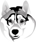 Muzzle surprised dog  drawing. Vector drawing of the head dog breed Siberian Husky Royalty Free Stock Photos
