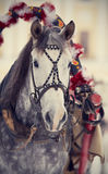 Muzzle of a white horse in a harness. Stock Photo