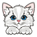 Muzzle of white kitten with paws. Cute snout of white kitten with two paws ona white background Stock Photos