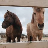 Muzzles of the horses. Square photo of unhappy muzzles of two horses stock images
