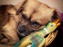myśliwy śpiący zdjęcia royalty free