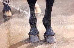 Myć cieków i kopyt konia zbliżenie Zdjęcia Stock