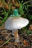 Myśląca żaba Zdjęcia Royalty Free
