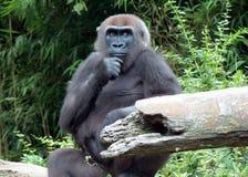 Myśląca małpa Zdjęcia Stock