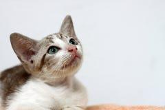 MYŚLĄCY kot Obrazy Stock
