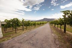 Myśliwy doliny winnicy Fotografia Royalty Free