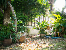 My backyard plantation. The nature place in my house Royalty Free Stock Photos