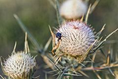 My balls. Small insect on big plants Royalty Free Stock Photos