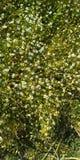 My beautiful daisys stock image