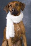 My Beautiful Dog Stock Photography