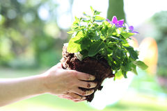 My beautiful garden Stock Image