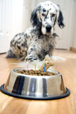 My best friend's birthday. Dog in front of his Birthday cake with candles Stock Photography