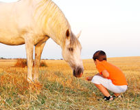 My big friend. Boy feeding white horse at the farm stock photography