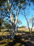 Bike among the trees stock photography