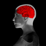 My Brain. A image of a brain inside a womens head Stock Image