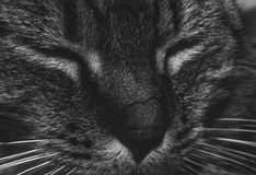 My cat Stock Images