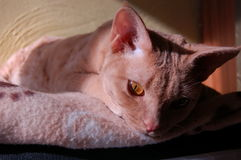 My cat. A portrait of a beautiful female cat just relaxing on a lazy afternoon Stock Photos