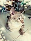 My cat. Cute cat beautiful pet Royalty Free Stock Photography
