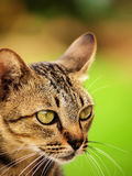 My Cat go to prey Stock Images