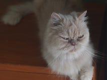 My cat Royalty Free Stock Photos