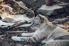 My cat it look tiger stock photography