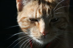 My cat money 6. He is my cat, one of my family, he is 18 months old stock images