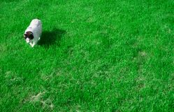 My cat. Photo taken of my cat in the grass Royalty Free Stock Images