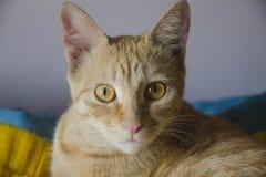 MY CAT SWEET