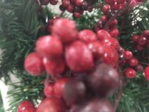 My Christmas berry. The very red berries royalty free stock photos