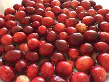 My cranberry heaven. A heathy dose of cranberries stock photography