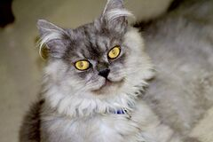 My cute cat with beautiful looks