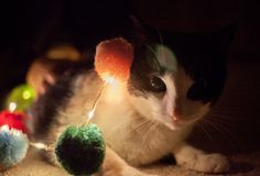 Night light cow cat. This is my cute cat hope you like it i use the led light to make image beautiful stock photos
