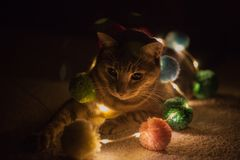 Night light cow cat. This is my cute cat hope you like it i use the led light to make image beautiful stock image