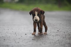 My cute & little puppy stock photography