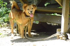 My cutle little dog takes a closer look with the camera. My dog knows that it was phototaking thus, it smiles stock photo