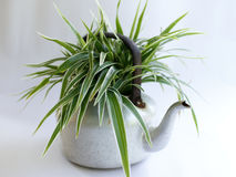 My DIY. Green plant grow in the pot royalty free stock image