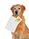 "My dog -"" Golden retriever "" Royalty Free Stock Images"