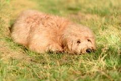 My Dog 👌🏽 Stock Photos