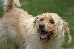 Free My Dog Stock Photo - 58176470