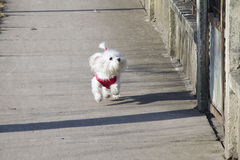 My dog Royalty Free Stock Photos