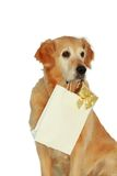 "My dog -"" Golden retriever "" Royalty Free Stock Photo"