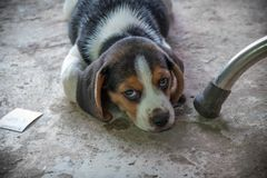 My dog is name eggplant. My dog is good friend about some time i`m sad Royalty Free Stock Photos